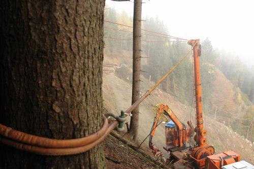 kabel vastgemaakt aan een boom